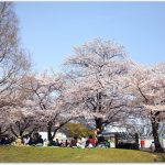 万博公園の花見ってどう?桜の混雑は?デートもおすすめ?