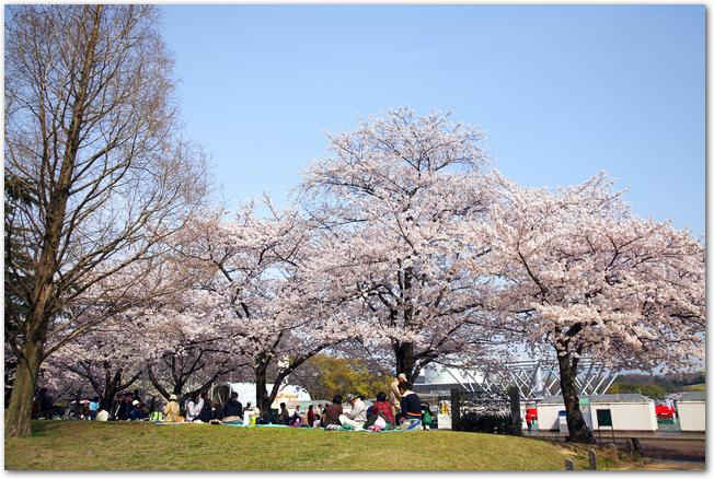 晴れた日に万博公園でお花見をしている人々の様子