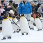 旭山動物園の見どころと行き方は?攻略法おしえます!